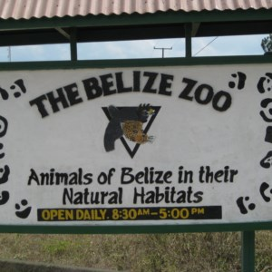 Belize Zoo - Animals of Belize in their Natural Habitat!