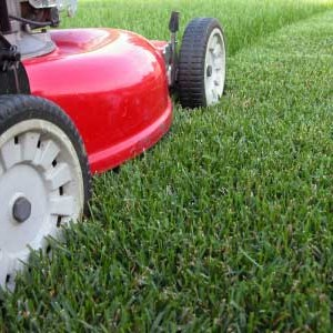 Mow your lawn with a lawn service or diy