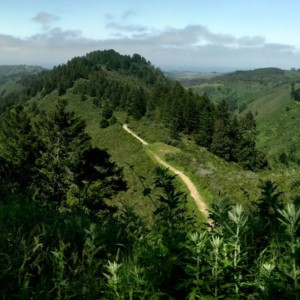 Purisima Creek Redwoods North Ridge Trail in Redwood City, CA.