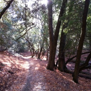 Around the 2-4 miles, the path is mostly shaded, and full of fall leaves (in Nov).