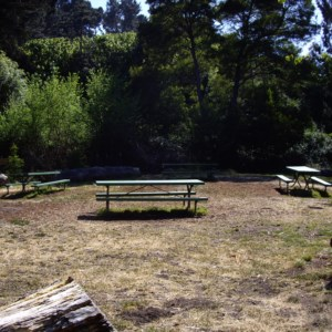 These are the picnic benches and grills. Notice the two large logs that divide the picnic area from the field. A few times, someone almost tripped over it while catching a football.