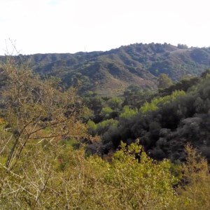 Views of the nature from Zinfandel Trail